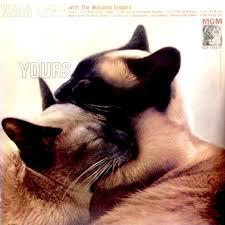cat photo album 297 best cat record covers images on cats album
