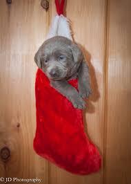 cutest stocking stuffer jd photography pinterest stocking