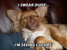 High Dog Meme - http static fjcdn com pictures new stoner dog i love