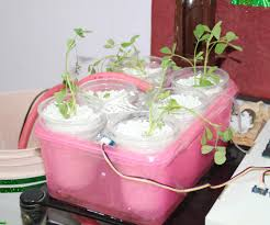 multipurpose hydroponics and soil gardening solution 9 steps