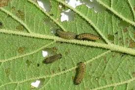 Common Plant Diseases - identifying problems and plant common diseases of garden flowers