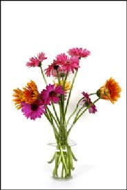 fresh cut flowers fact or fiction vodka and citrus sodas keep cut flowers fresh