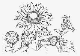 dafna sunflower coloring page sunflower coloring pages for kids