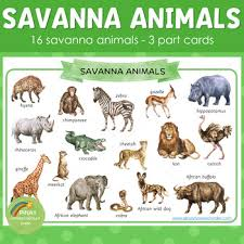 montessori inspired animals 3 part cards by