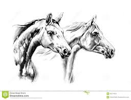 mustang horse drawing horse drawing sketch art handmade stock illustration image 54074423