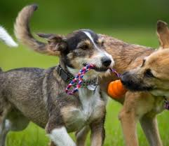 Are All Dogs Colour Blind Dog Myths And Misconceptions Pawderosa Ranch
