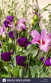 hues of purple purple hibiscus flower stock photos u0026 purple hibiscus flower stock
