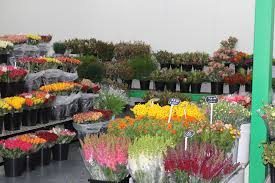 wholesale flowers santospirito flower wholesalers melbourne footscray