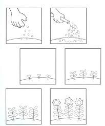 learningenglish esl life cycle of a plant common core