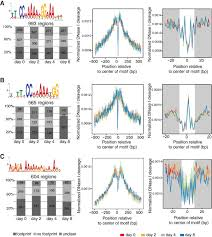 Meme Chip - dnase i footprints created by tf binding at different time points of
