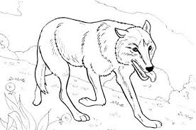 wolf color u2014 allmadecine weddings wolf coloring pages