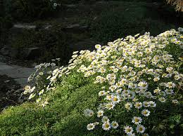 create a faux rock garden on a hillside or berm state by state