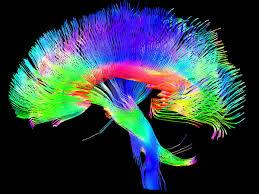 Brain Mapping Brain Gym The Neuro Light