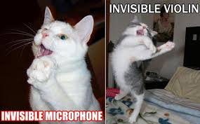 Invisible Cat Memes - 25 funny pictures of cats with invisible things design swan