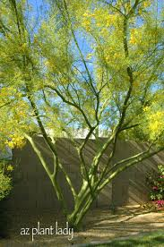 native plants in the desert a wonderful dilemma ramblings from a desert garden