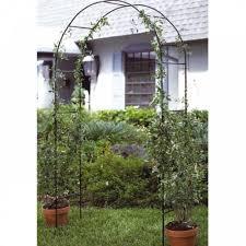 garden rose arch climbing plant flower metal trellis support ivy