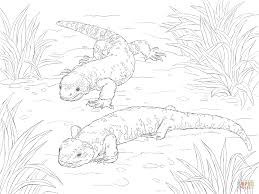 beaded lizard and gila monster coloring page free printable