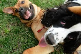 8 tips to socialize your dog with other dogs u0026 humans rover com