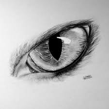 best 25 wolf eye drawing ideas on pinterest how to draw wolf