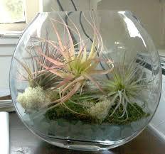 47 best terrarium images on pinterest gardening air plants and