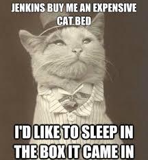Bed Meme - jenkings buy me an expensive cat bed cat meme cat planet cat planet