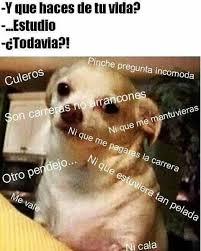 Memes S - perro chihuahua meme s mega memeces funny dog pinterest