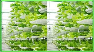 vertical aquaponics systems design in a greenhouse youtube