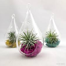 small plants for home decor small droplet air plant terrarium