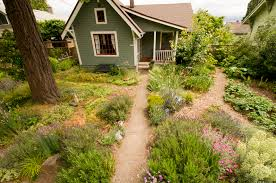 native plants in landscape management yard and garden metro