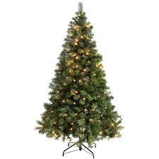 co uk trees