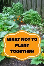 15 gardening tips u0026 tricks for absolute beginners beautiful