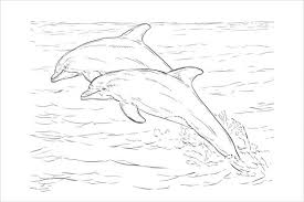 8 dolphin coloring pages jpg ai illustrator download