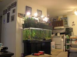 indoor aquaponics city dwelling vegetable farming while making