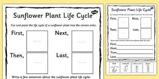sunflower plant life cycle sentence writing activity sheet