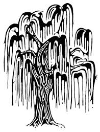 trunk outlines tree drawing weeping willow