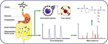 food chemistry vol 163 pgs 1 298 15 november 2014