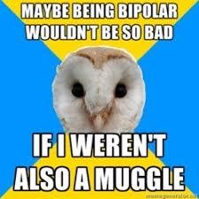 Owl Birthday Meme - bipolar owl