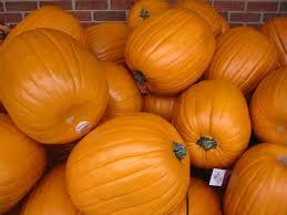 plastic pumpkins carvable plastic pumpkins photo page everystockphoto