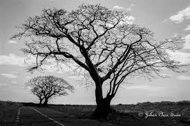 three leafless trees clicking the light