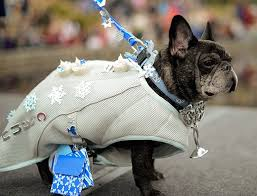 black friday target commercial christmas is here from la la la ding dong ding dong 91 best a very frenchie christmas images on pinterest animals
