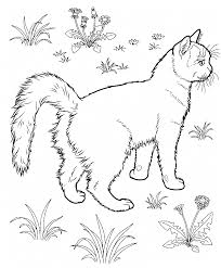 zentangle cats to coloring pesquisa google coloring cats and