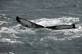 state officials issue new warning to boaters about whales in cape