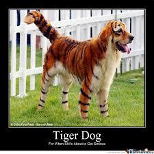 Tiger Meme - tiger dog by mcmahnigle meme center
