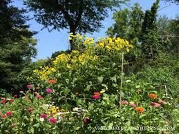 Summer Flowers For Garden - best flowers for all summer color lots of blooms great for