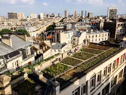 paris gardener sets up vegetable garden on the rooftop of the