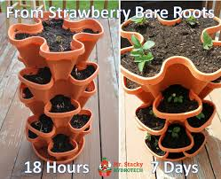 Diy Strawberry Planter by 5 Tier Strawberry Planter