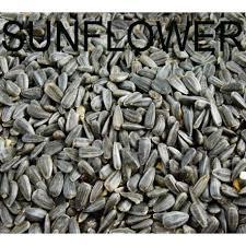 black sunflower bird seed for sale shop online or sydney store