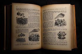 livre de recettes de cuisine gratuite images gratuites marque conception texte calligraphie livre