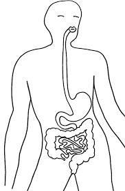coloriage du système digestif tête à modeler