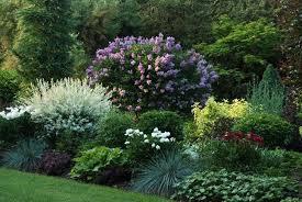 Shrub Garden Ideas Awesome Garden Shrubs Ideas H71 On Home Design Planning With